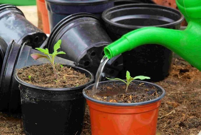 Дрожжевая подкормка томатов: основные секреты