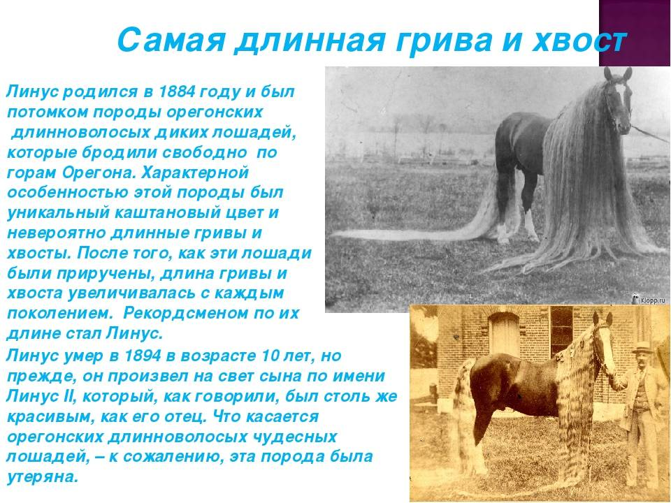 От верховой езды до конного спорта