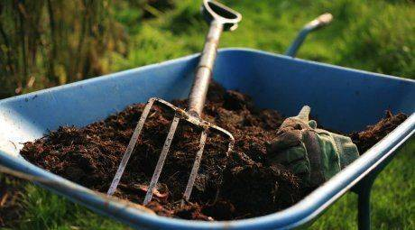 Подкормка малины осенью: различные варианты удобрений для успешной зимовки и обильного урожая |