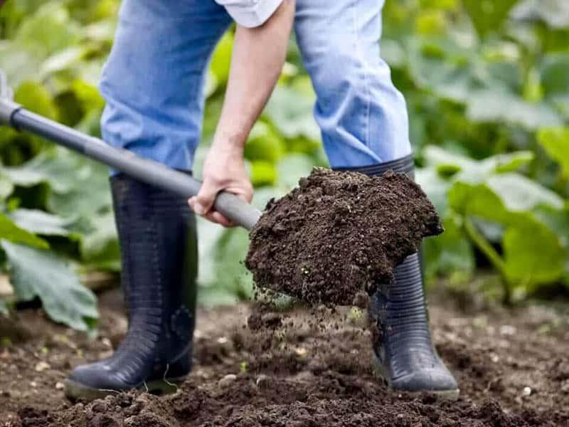Урожайный фурор f1. характеристика огурца и рекомендации по выращиванию