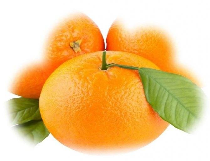 Сонник кидаться апельсинами. к чему снится кидаться апельсинами видеть во сне - сонник дома солнца