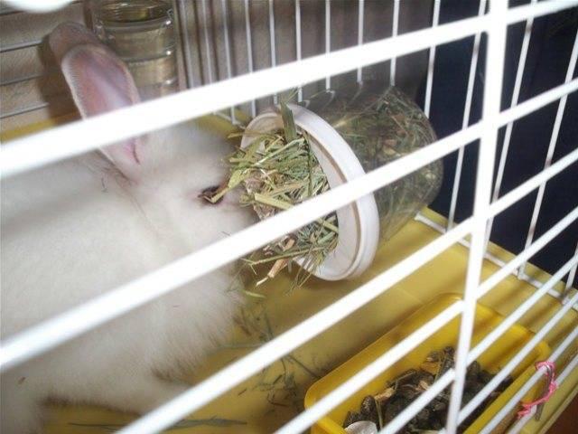 Сенник для кроликов: кормушка для сена своими руками, интересные идеи. как сделать удобные ясли для декоративного кролика? размер ячеек и чертежи кормушек для кроликов на  выгуле