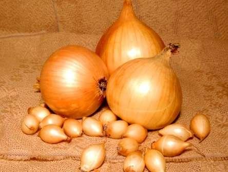 Лук центурион репчатый: описание желтого озимого гибрида f1, характеристика, вкусовые качества сорта, посадка севка, уход, сбор и хранение урожая