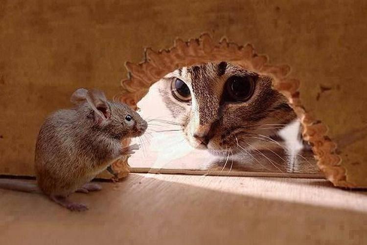 Как избавиться от мышей на даче: оцениваем безопасность и эффективность разных способов
