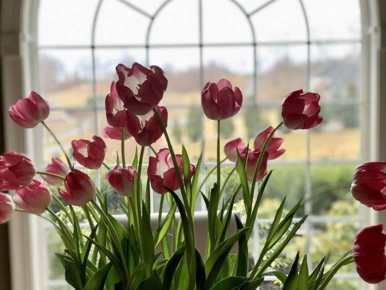 Садовые и комнатные луковичные цветы