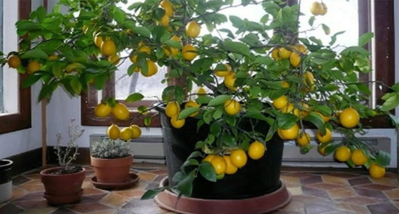 Удобрения для комнатных цветов в домашних условиях: 20 натуральных подкормок!