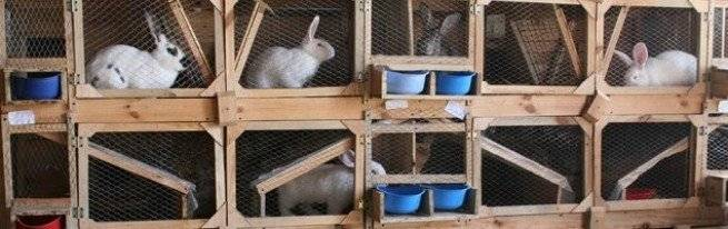 Клетки для кроликов золотухина — размеры и чертеж ( видео)