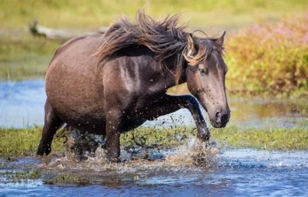 Беременность лошади: сколько длится и как проходит