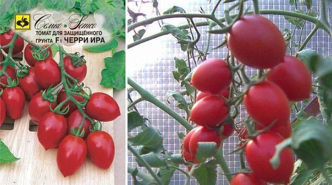 Описание пяти низкорослых сортов помидоров черри для открытого грунта
