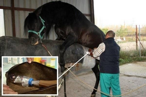 Все о спаривании лошадей: особенности размножения, случки и скрещивания лошадей