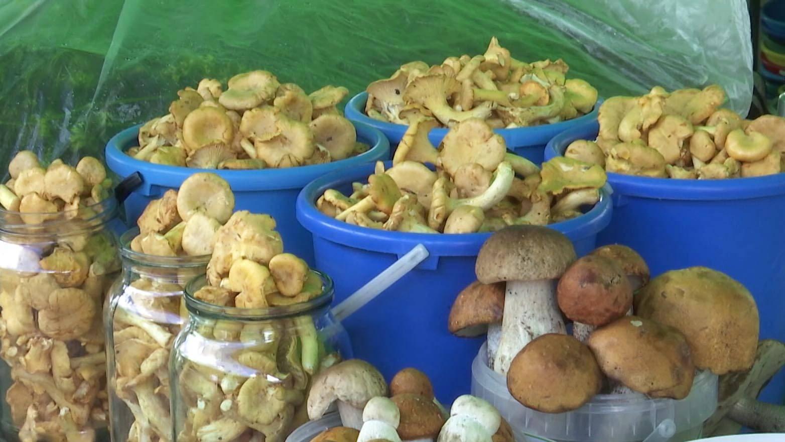 Почему нельзя собирать грибы в високосный год