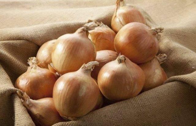 Лук сеттон: описание сорта, отзывы о вкусовых качествах, фото луковиц, а также особенности посадки и ухода, характеристика урожайности