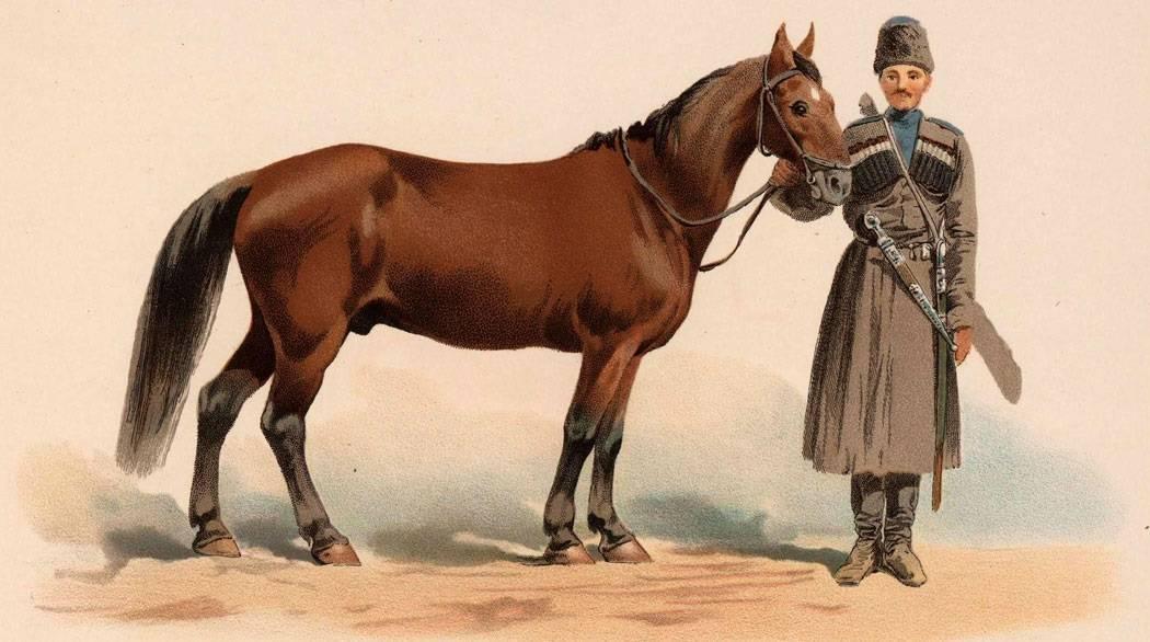 Зоотехническая характеристика лошадей кабардинской породы, внесенных в дополнение к vii тому госплемкниги