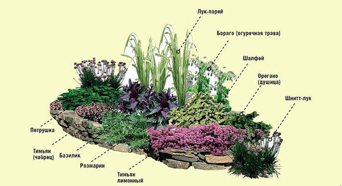 Лучшие растения для альпийской горки: фото и названия