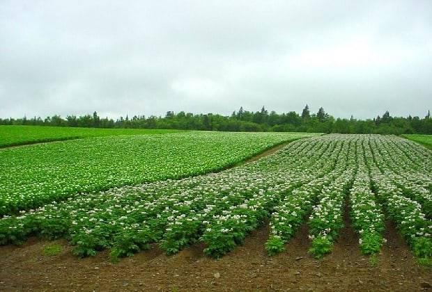 Зола как удобрение, виды золы, ее состав, полезные свойства