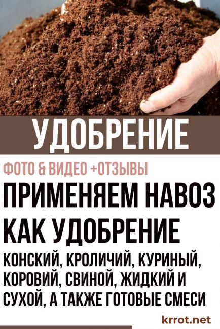Конский навоз как удобрение: как применять его с пользой, можно ли использовать свежий весной, как развести для подкормки и удобрять ею огород, отзывы дачников