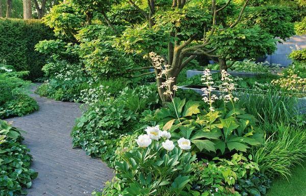 Цветок роджерсия: посадка и уход, способы размножения, применение в ландшафте + описание растения, виды и сорта с фото