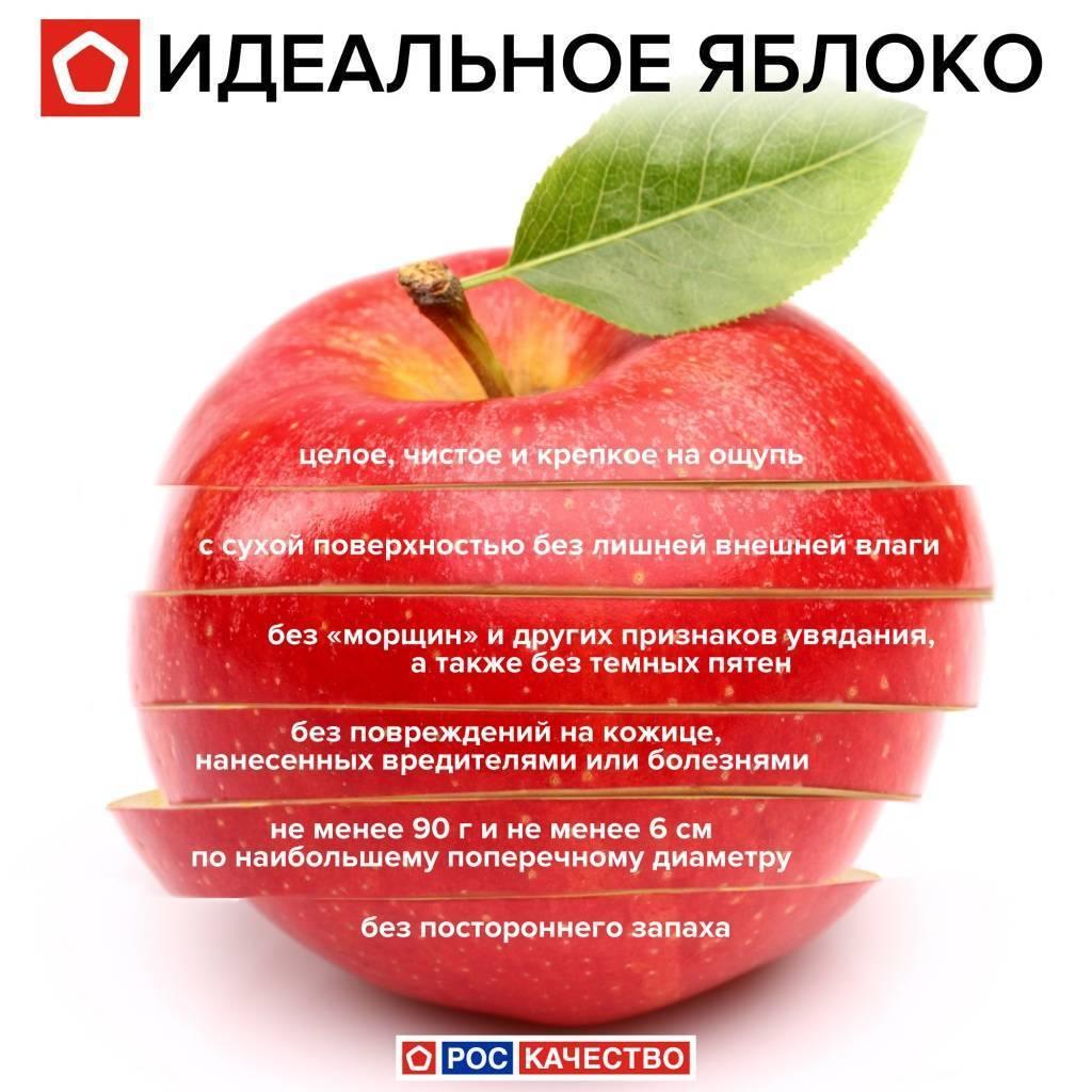 Употребление яблочных семечек: полезно или вредно. как можно употреблять яблочные семечки спользой   omj