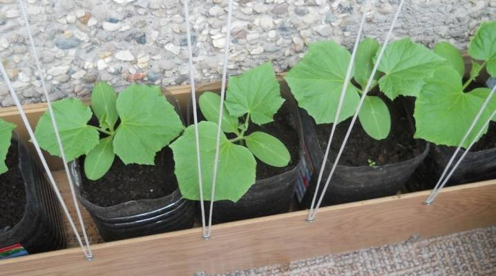 Подкормка огурцов в теплице: какие удобрения и когда использовать