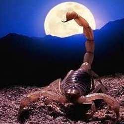 Луна в скорпионе. луна в знаках зодиака