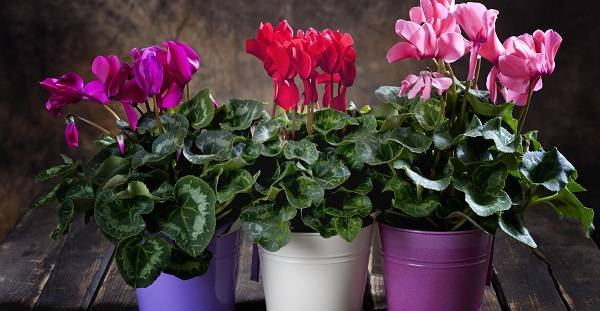 Неприхотливые в уходе растения для дома