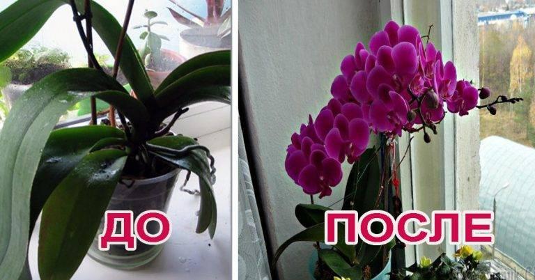 Как заставить орхидею цвести и почему растение не цветет в домашних условиях
