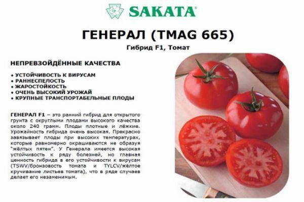 Томат бравый генерал: отзывы, характеристика и описание сорта, фото, урожайность