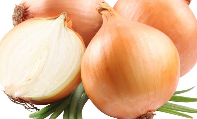 Лук купидо: описание, отзывы о гибриде севке f1, особенности посадки и ухода, описание вкусовых качеств и характеристика урожайности
