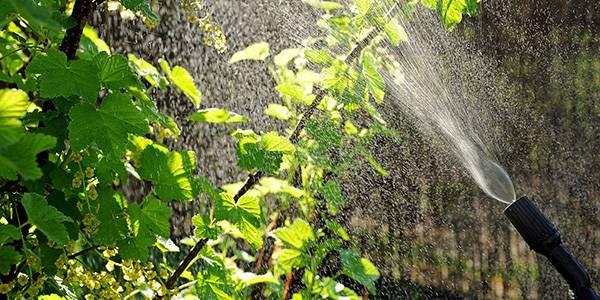 Защита растений: настои и отвары от вредителей
