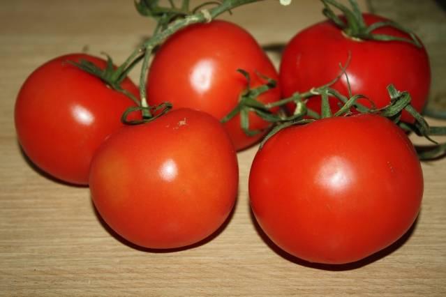 Подкормка томатов в теплице. самые лучшие удобрения, и когда их нужно использовать