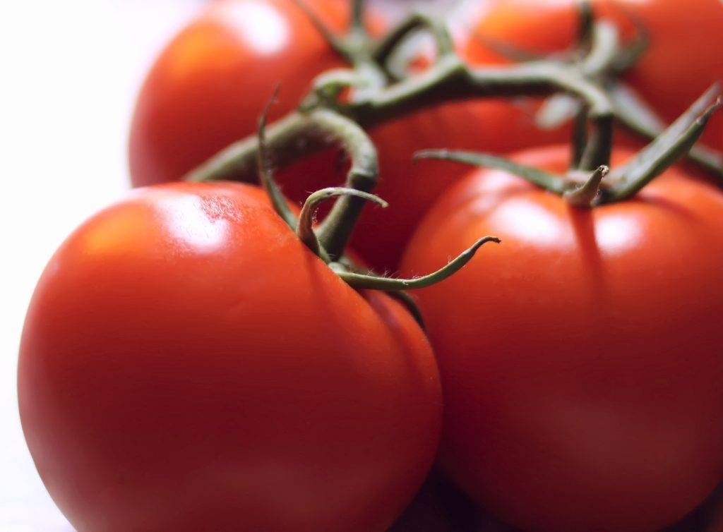 ✅ чудо лентяя: описание сорта томата, характеристики помидоров, посев