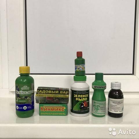 Средства защиты растений от вредителей и болезней: пестициды, виды и классификация инсектицидов, фунгицидов и гербицидов