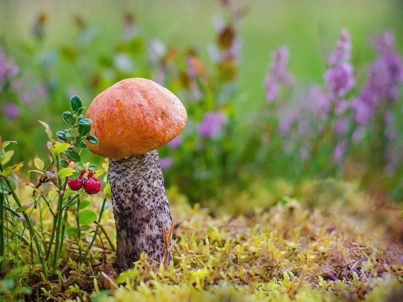 Как и где самому вырастить грибы: советы начинающим