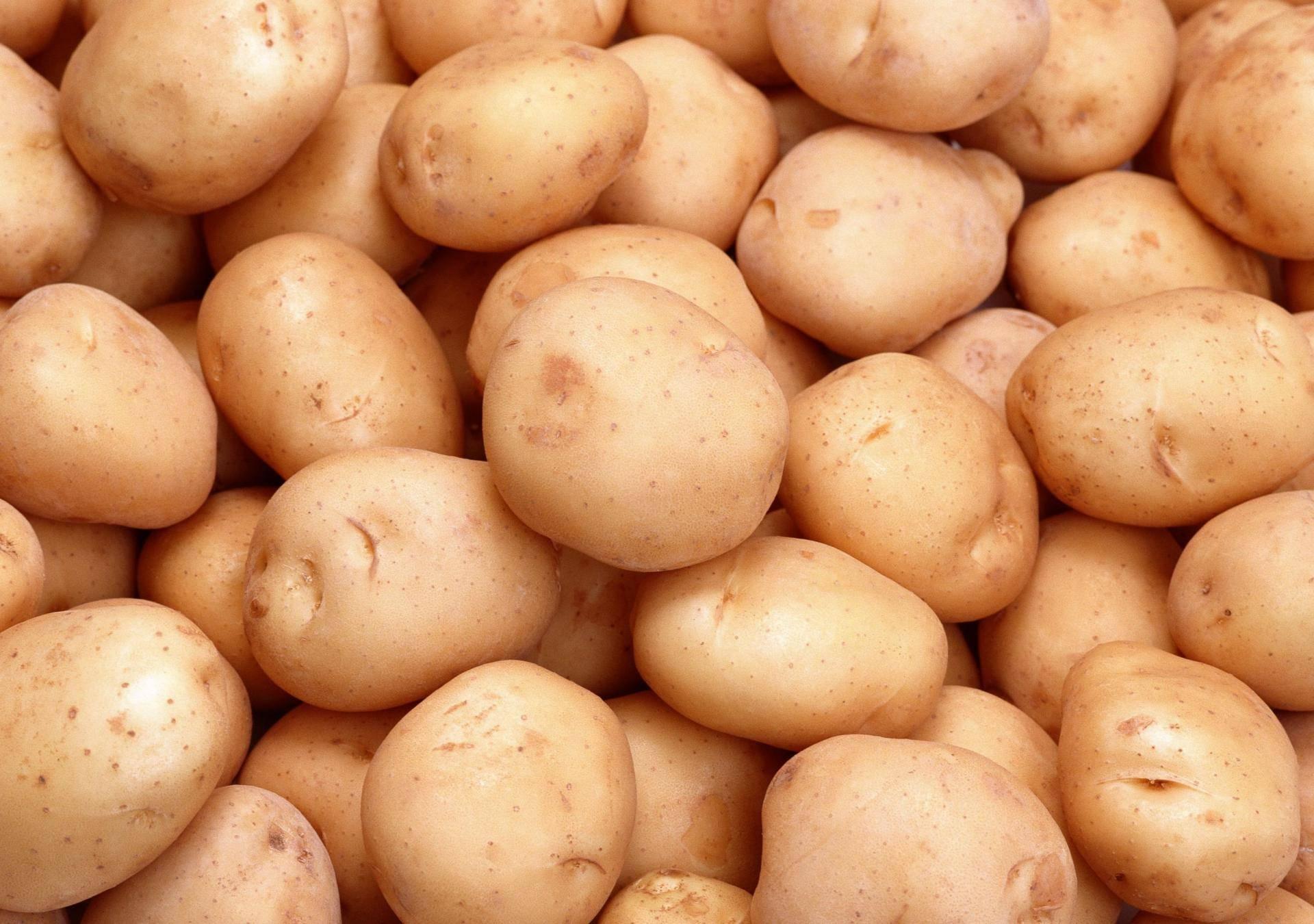 Сорт картофеля «голубой дунай»: подробное описание, характеристика и фото