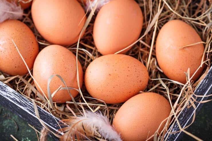Как собрать и хранить куриные яйца для инкубации в домашних условиях: сроки, способы хранения