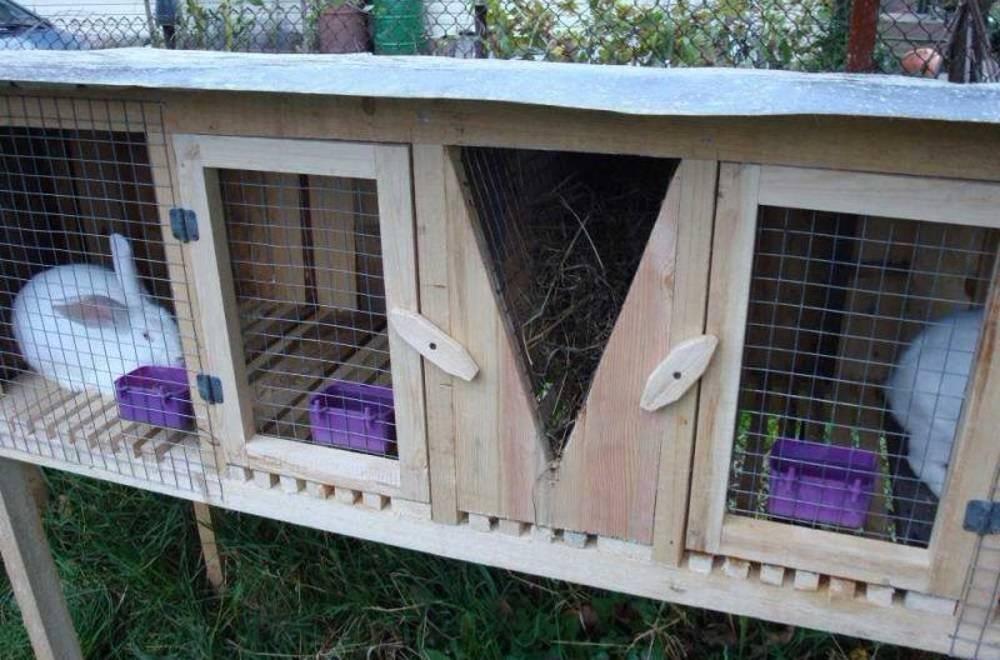 Как сделать крольчатник - 110 фото лучших проектов и советы по их постройке