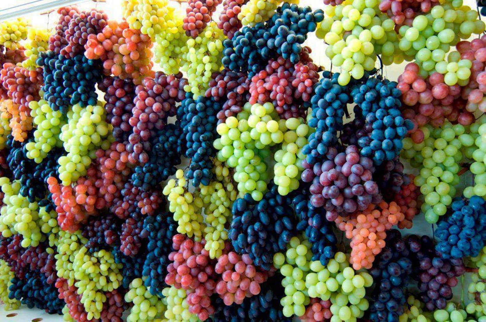 Все о подкормке винограда