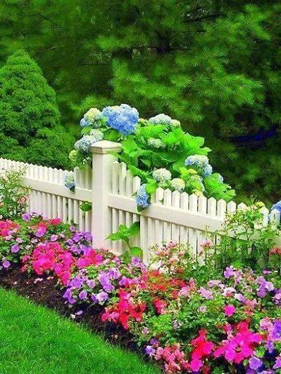 Растения, которые можно посадить вдоль забора на даче