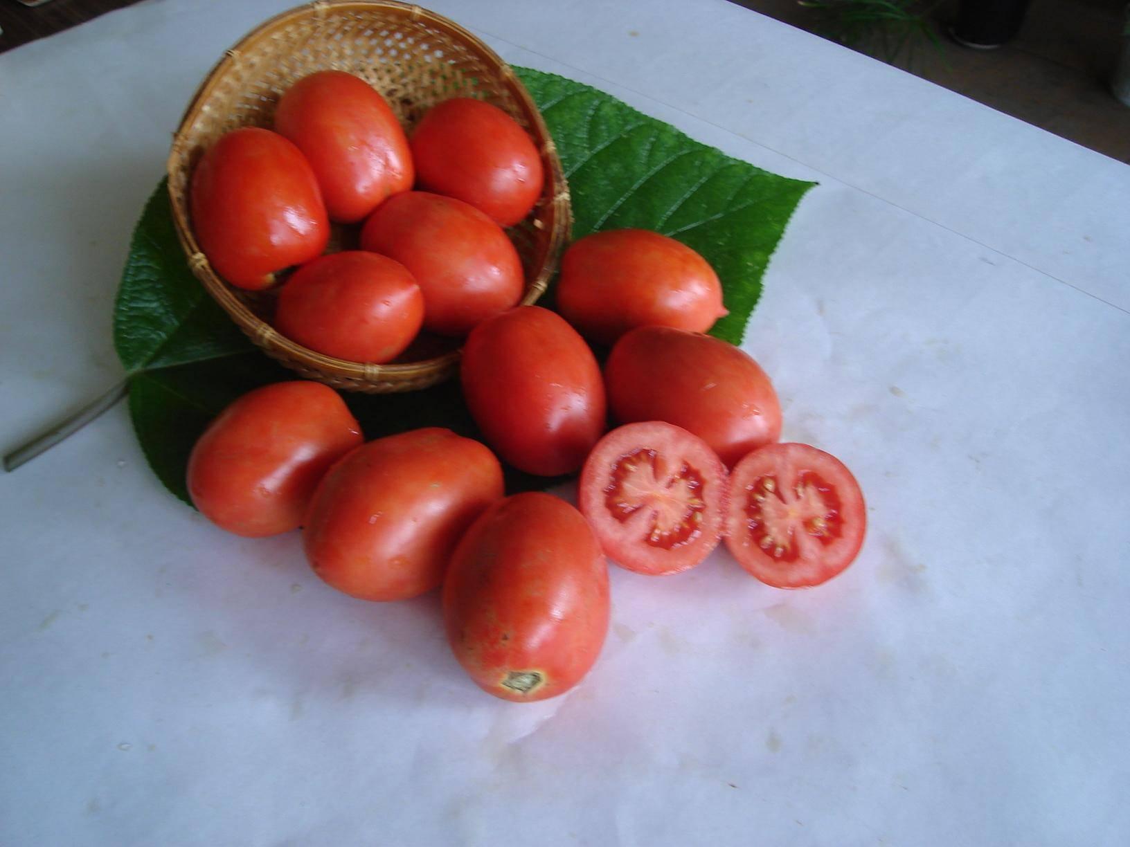Сорт томата челнок: описание и советы по выращиванию