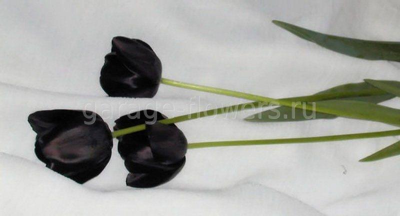 Черные тюльпаны — популярные сорта