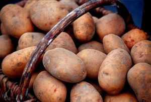 Сынок — картофель, поражающий воображение