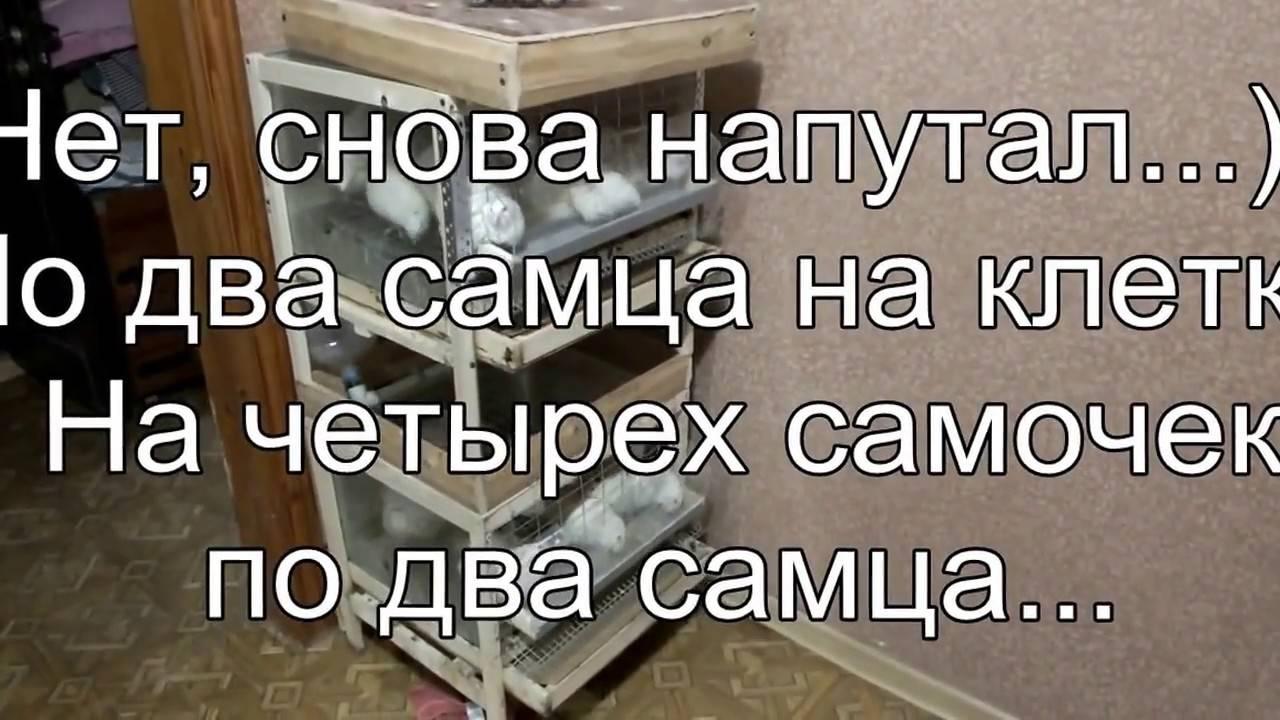 Правила содержания перепелов в квартире