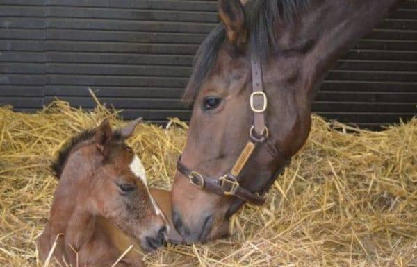 Беременность у лошадей