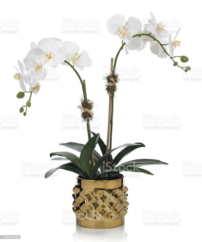 Синие орхидеи: крашеные или нет и бывают ли настоящие в природе, а также существуют ли они голубого цвета; есть ли смысл их покупать?
