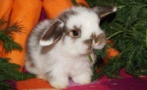 Карликовый кролик (56 фото): чем можно кормить мини-кроликов? особенности ухода в домашних условиях. сколько лет они живут? отзывы владельцев