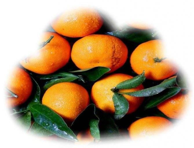 К чему снятся мандарины - значение сна мандарины по соннику