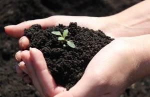 Удобрение сапропелем в домашних условиях: что это такое и как применять в саду и огороде?
