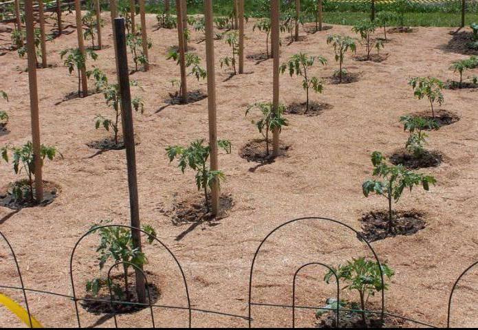 Древесные опилки как удобрение: как сделать компост и правильно применять перегной