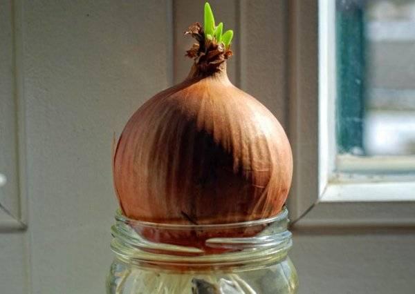 Особенности полива лука в открытом грунте: как часто поливать и когда прекращать, применение соленой воды