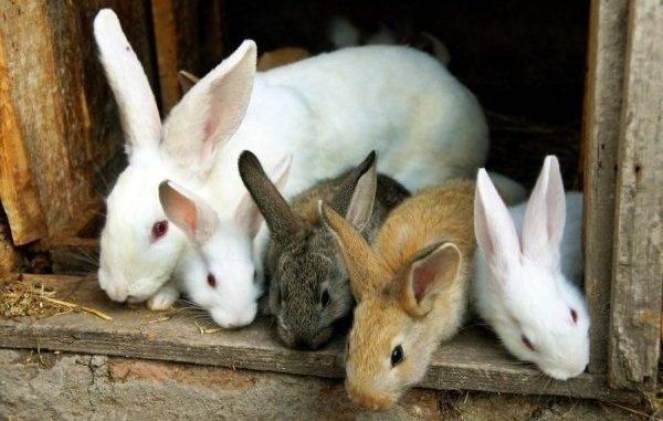 Самые интересные факты о кроликах для детей | zdavnews.ru